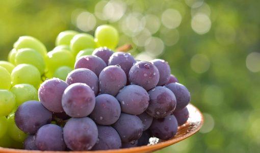 【ギモン】赤ワインと白ワインでなんで色がちがうの?